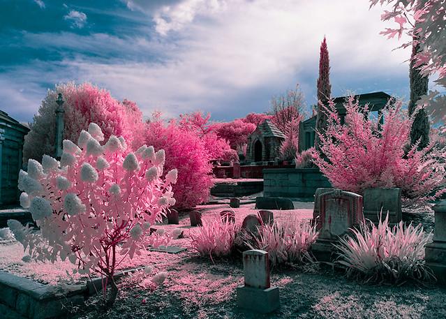 Oakland-Cemetery-2