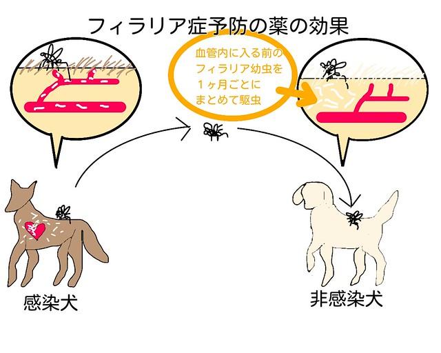 犬のフィラリア予防の薬の効果
