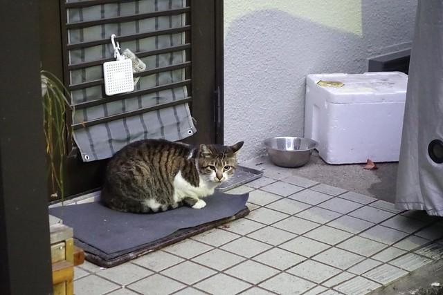 Today's Cat@2019-03-04