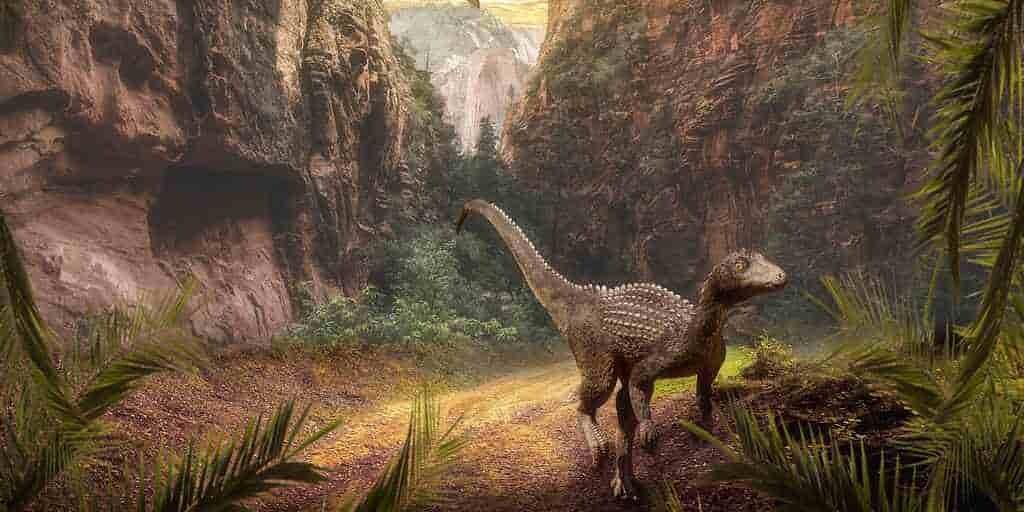 fossiles-animaux-vie-découverte(1)