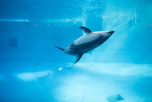 20190111 Nagoya Aquarium 9