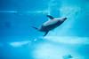 Photo:20190111 Nagoya Aquarium 9 By BONGURI