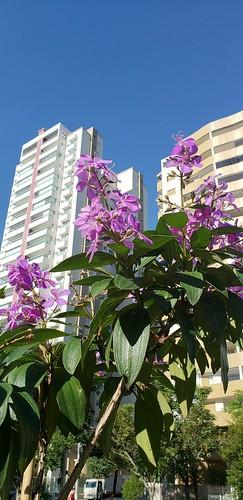 Flores no parque Aquarius em São José dos Campos /SP