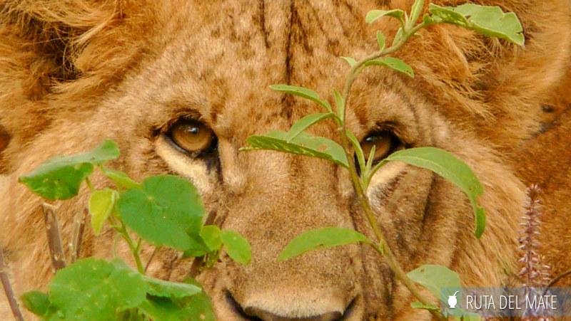 Guia para viajar a Kenia y Tanzania P1130650
