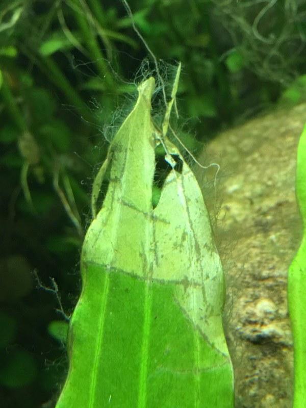 identification des algues 45674933335_fc214d7024_c
