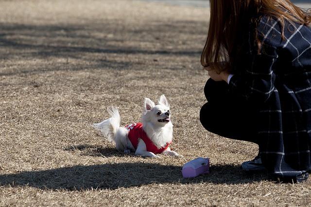 喜びの気持ちでしっぽを振る犬