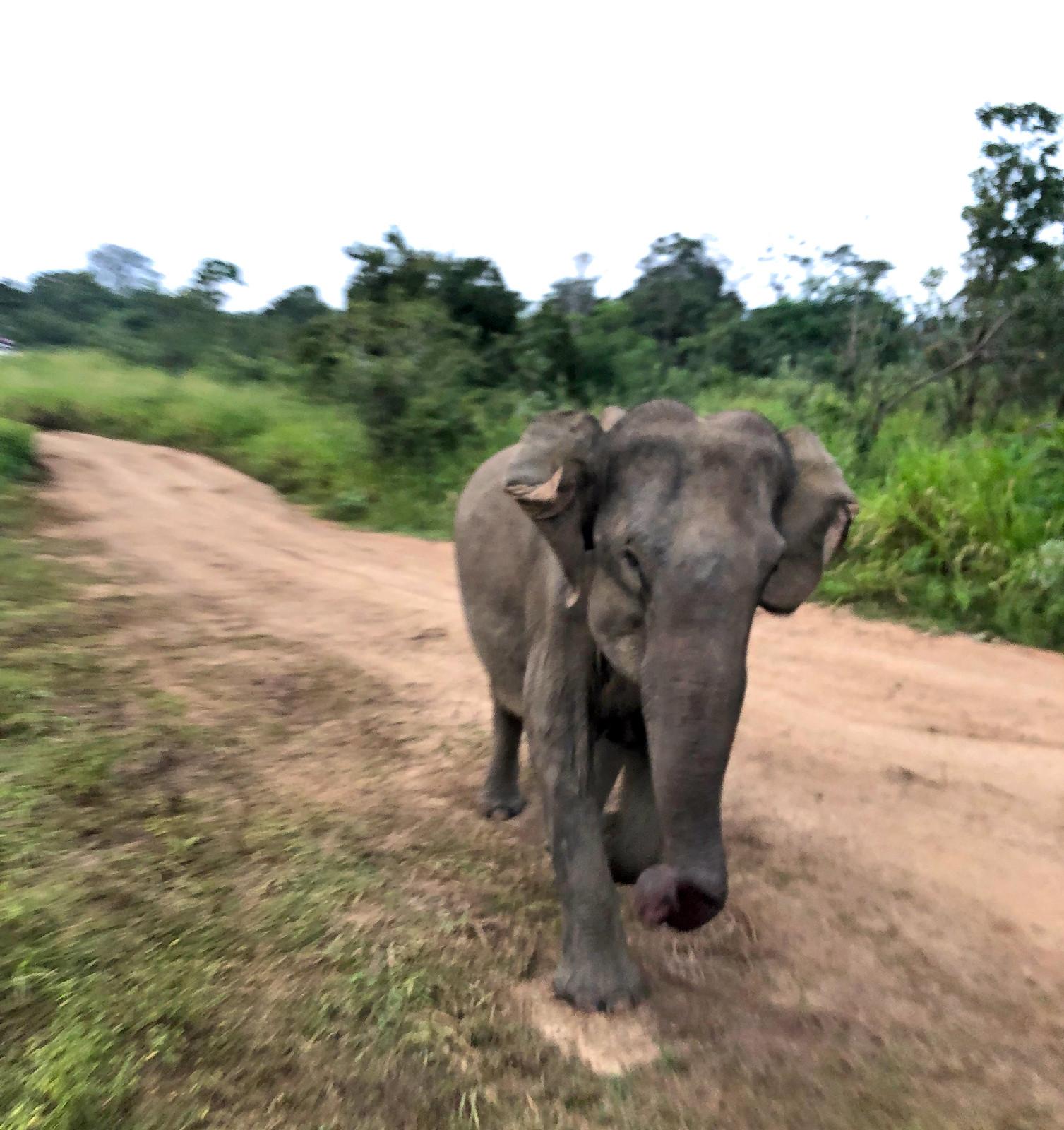 VER ELEFANTES SALVAJES EN SRI LANKA ver elefantes salvajes en sri lanka - 46249634644 a903c6096b h - Ver elefantes salvajes en Sri Lanka