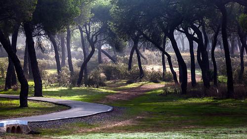 El Pinar de La Sorda. Aljaraque (Huelva)