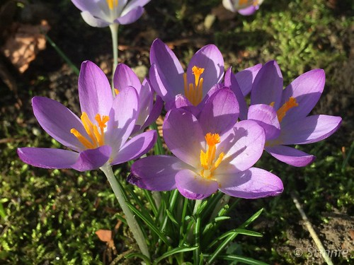 Spring in February I - 2019