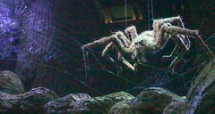 An Acromantula - Aragog's Descendent - in the Forbidden Forest