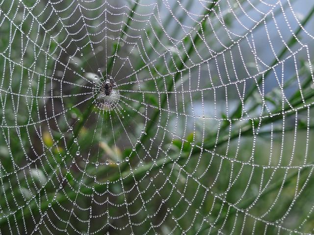 Spider web, Sony DSC-HX100V
