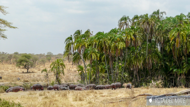 Animales hacer un safari P1140805
