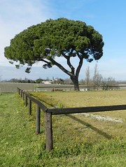 Pin parasol - Photo of Blaignan
