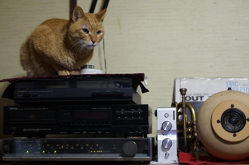 Cat stabilizer