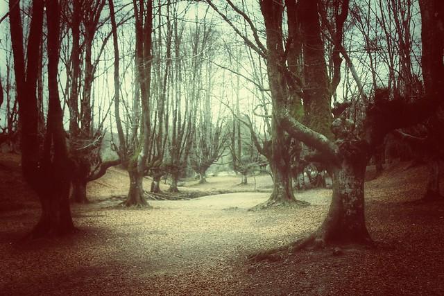 La magia del bosque...