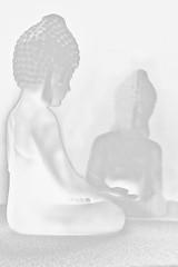Budha white & black.
