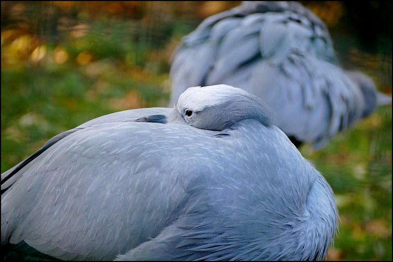 Une journéé au jardin des plantes avec les oiseaux. Rajouts. 31696926397_da931312ae_c