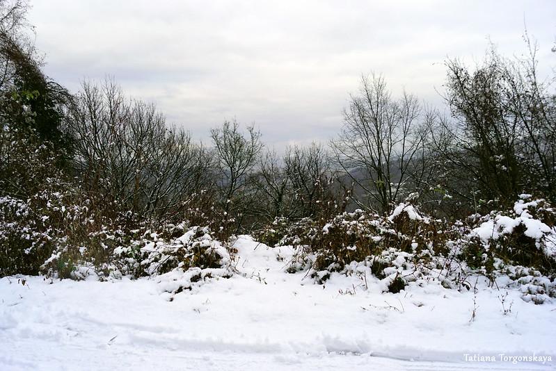 Деревья на склоне горы