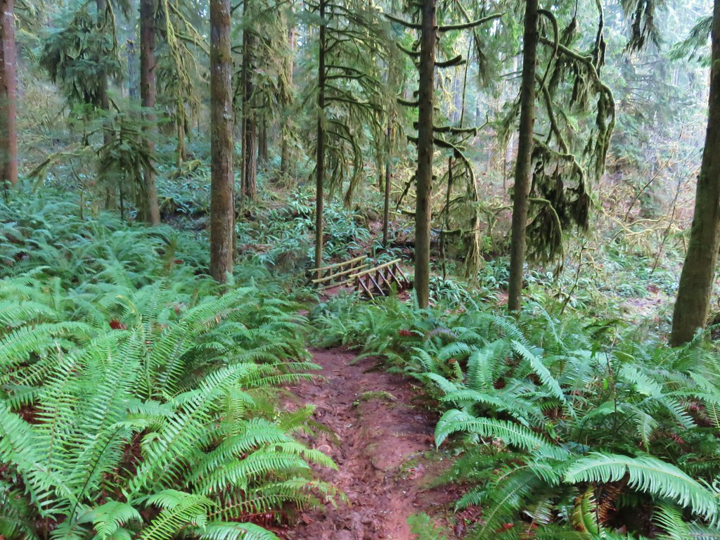South Willamette Trail