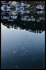 L'hiver sur le canal du midi. Agen. Lot-et-Garonne.  #nikonfr #nouvelleaquitaine #canaldumidi #agenmaville
