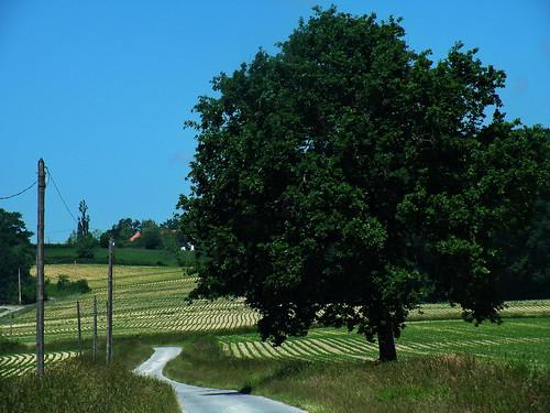 20090601 208 1111 Jakobus Weg Baum_K