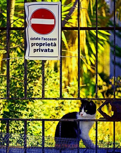 Attenti al gatto!!-beware of the cat!
