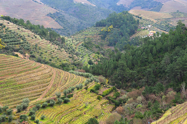 Vine covered valleys, Douro Valley, Portugal