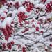Snowy_day_campus_Jan_2019-6194