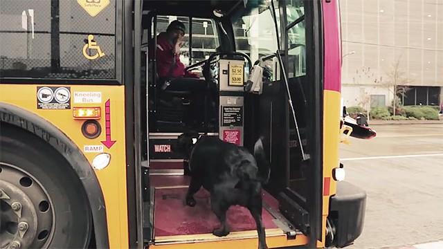 Perro-toma-el-autobus