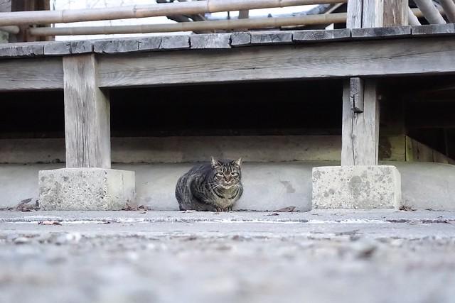 Today's Cat@2019-01-26