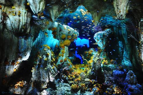 Colourful aquatic life