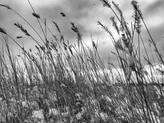 Grass and Sky and Grass and Sky