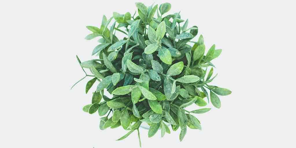des-feuilles-artificielles-co2