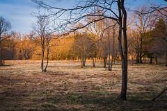 Fox Meadow Illuminated by the Setting Sun