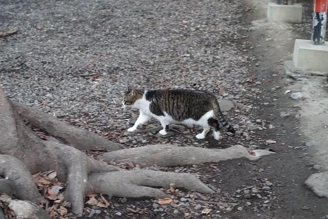 Today's Cat@2019-03-17