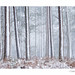 Fence Wood in Winter by George-Edwards