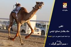 صور منافسات سباق الحقايق (الأشواط العامة) مهرجان سمو الأمير الوالد صباح 2- 3-2019