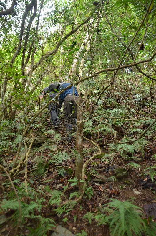 比利良山登山步道