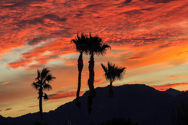 Sunrise With Silhouetted Palm Trees