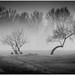Misty Forest 6 by frosty22727@sbcglobal.net