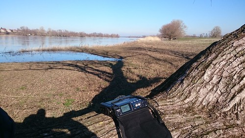 field-recording at the river Elbe