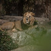 Im Frankfurter Zoo-bw_20190320_6194.jpg