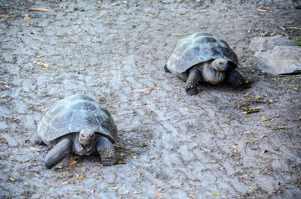 Turtles AK
