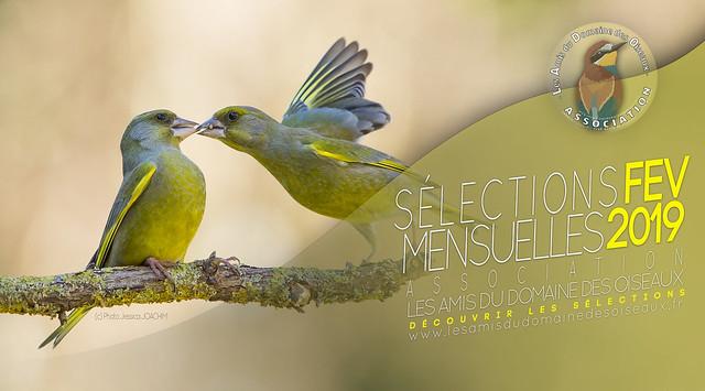Sélections photo FEV 2019 - Les Amis du Domaine des Oiseaux