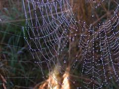 20080902 29352 1003 Jakobus Spinnenwebe Wasser Perlen