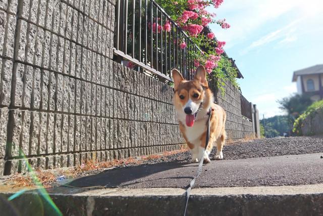 散歩を嫌がる子犬のために名前を呼んだところ