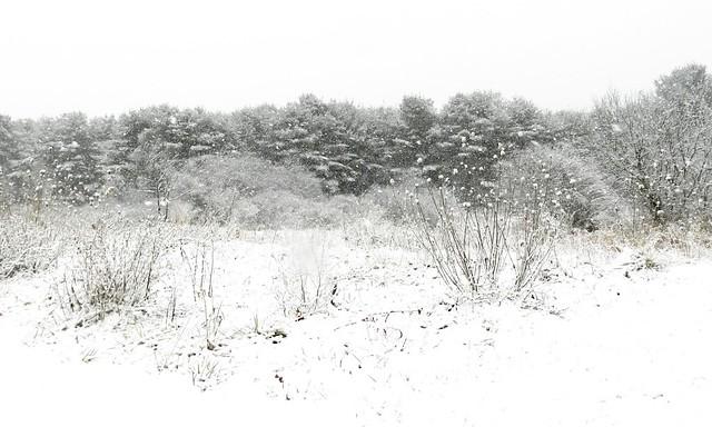 Snowy Day, Nikon COOLPIX P500