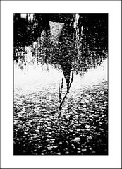 Au pays des Ombres / In the Land of Shadows #5