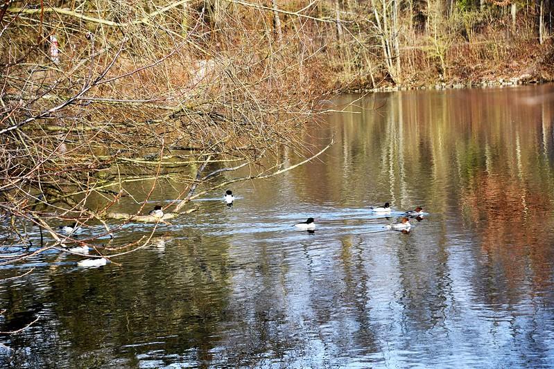 Ducks 19.02 (3)