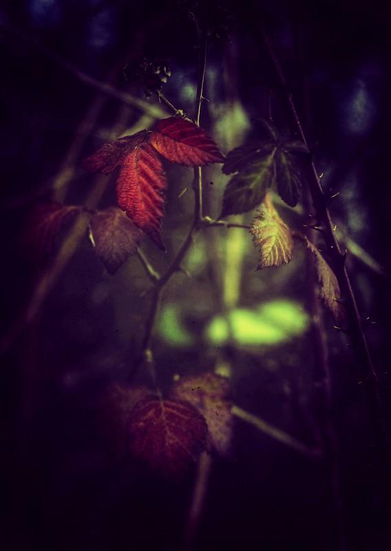 Si realmente amas la naturaleza, encontrarás la belleza en todas partes.  [ Vincent Van Gogh ]